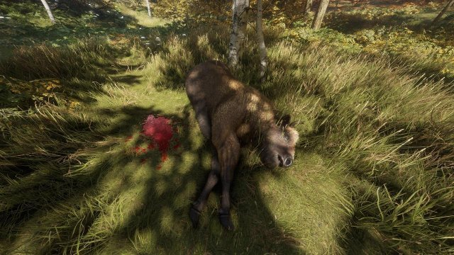 The Hunter: Call of the Wild - Beginner's Guide